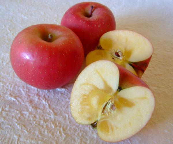 ふじ林檎の収穫が始まっています
