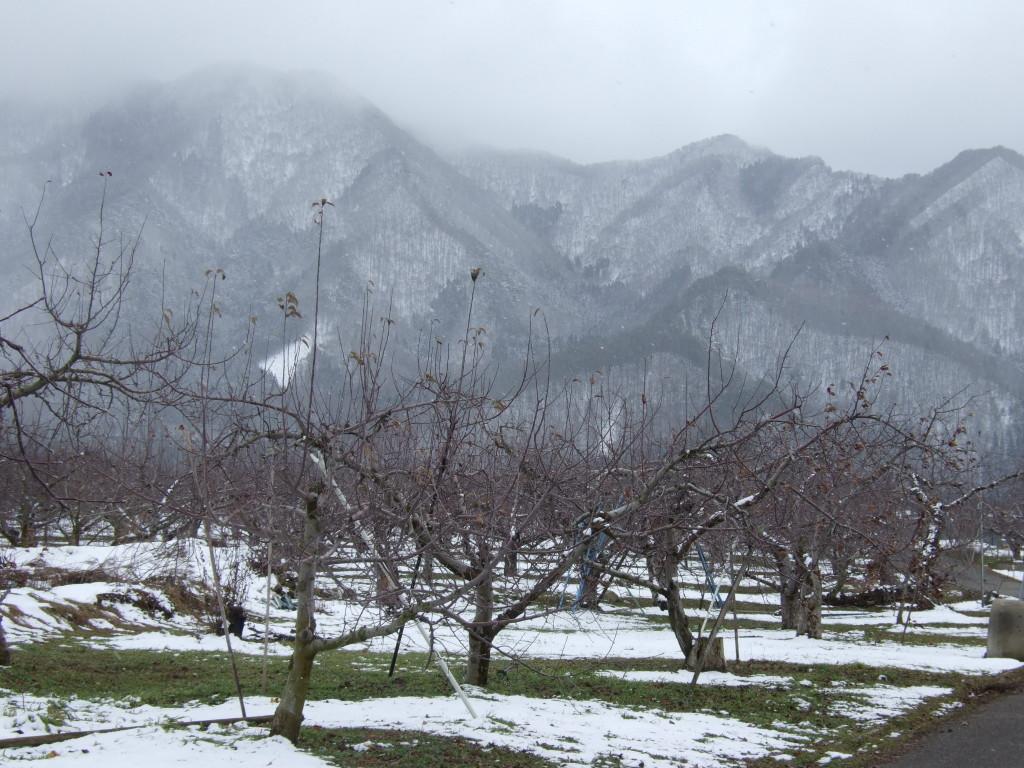 冬景色のりんご畑と近くの山々です。