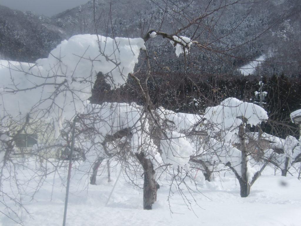 一晩であまりの積雪でびっくりです。